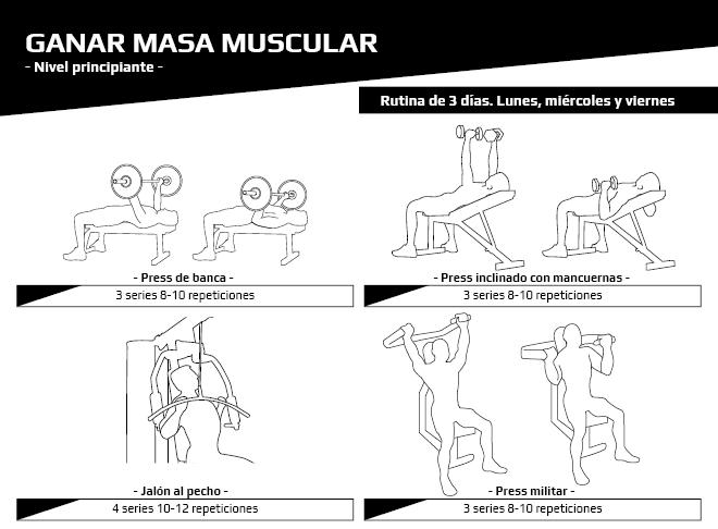 Principiantes - Masa muscular